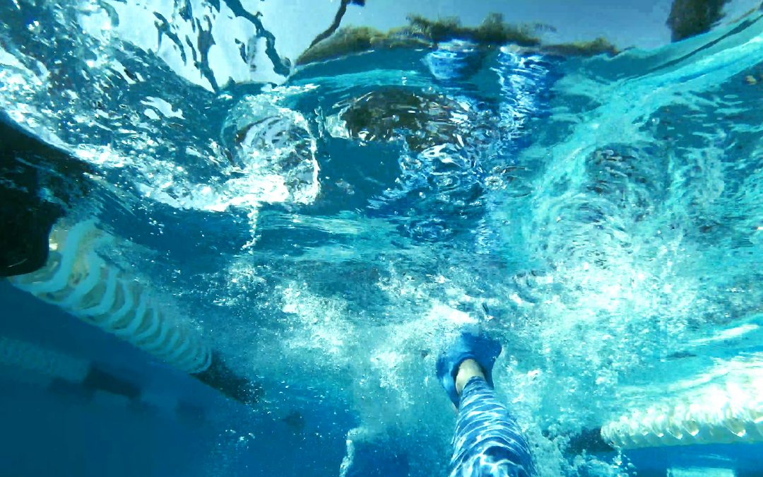 A still from a video shot by a swimmer underwater.